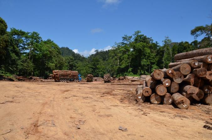 Regenwald abholzen für Palmöl